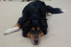 My lovely dog  Ella Fitzgerald ...I miss you!